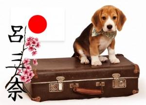 С животными в Японию