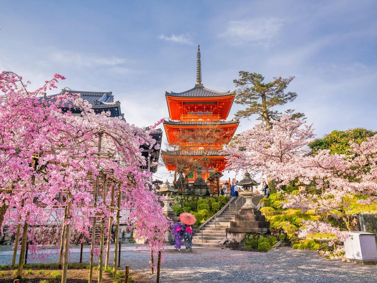Цветение сакуры, Япония